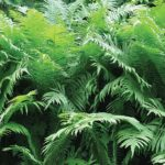 10111P8___natural_wild_plants_paprat_priroda_rastinje