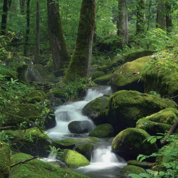 163P4___forest_rocks_cascade_waterfall_vodopad_suma_drvece_priroda