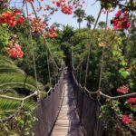 250P8___jungle_flowers_bridge_priroda_suma_cvece_most