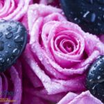 171p8 stones and pink roses