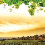 2330p8 jesen grozdje priroda zalazak sunca fototapeta foto tapeta 3d tapete fototapet