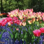 3403P4 colorful field of flowers