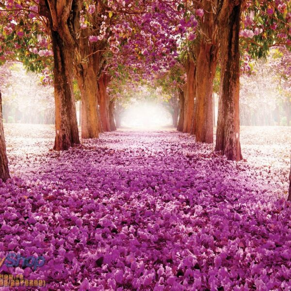 49652P4 purple trees tunnel