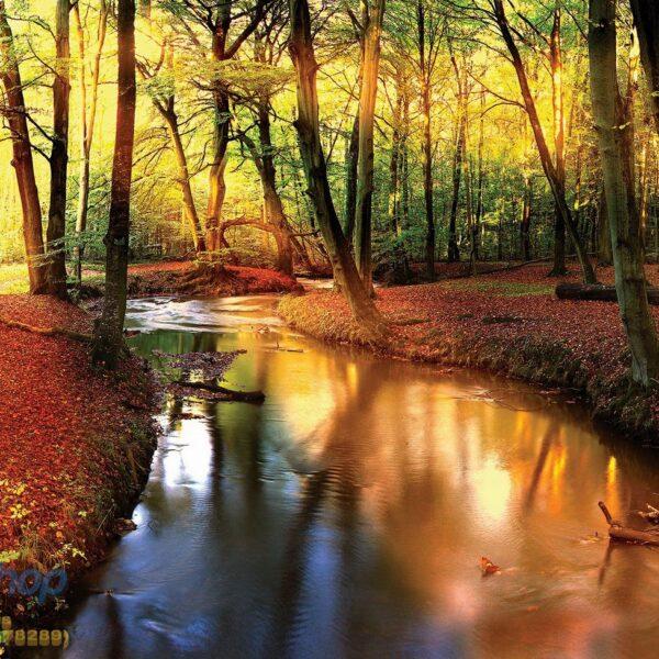 49654p8 potok reka suma jesen priroda fototapeta foto tapeta 3d tapete fototapet