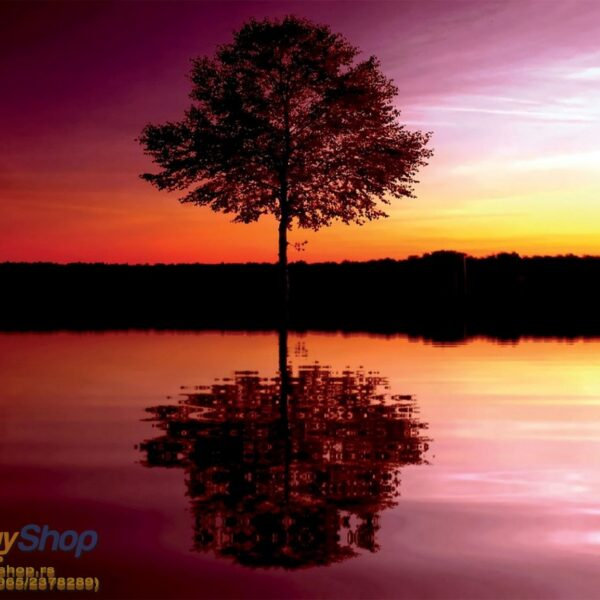 8-007P8 tree sunset reflection